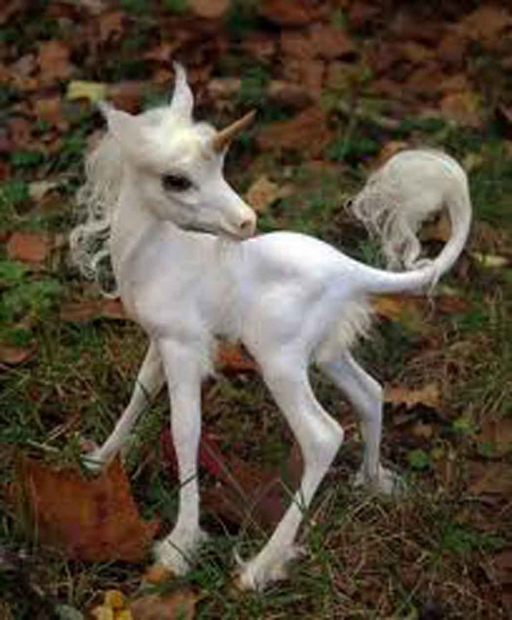 Image Result For Unicorning Out