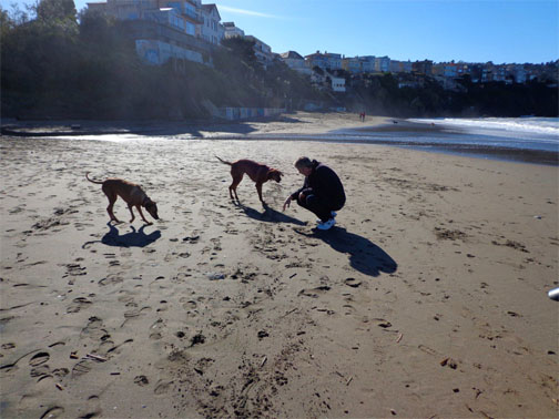 Dogs Trust Near De Dx