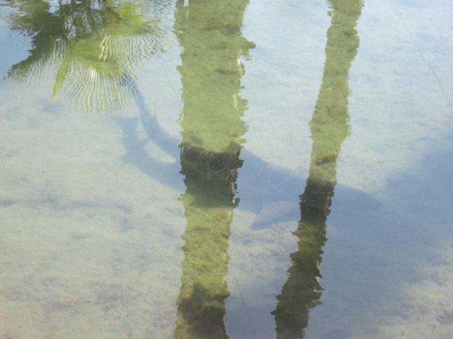 Big Lagoon Dogs