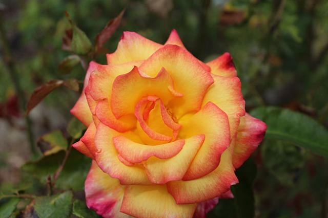 Pretty flowers a pretty girl a pretty view and some spider a 1 mightylinksfo